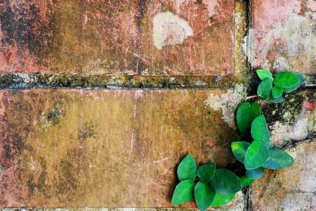 brown stone wall with green plant