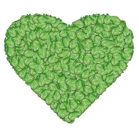 The heart leaf isolated on white