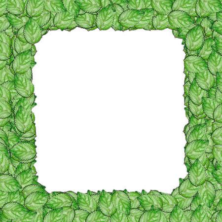 The leaf photo frame border Stock Photo - 13516498