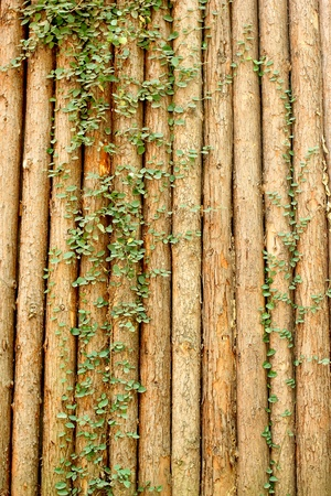 The abstract brown wood background with plant Stock Photo - 16218536