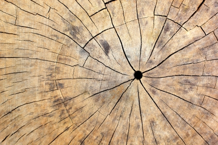The wood texture background for design and texture in design work  photo