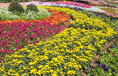 graden: flower in graden