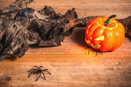 spider climbing out of the halloween pumpkin, halloween concept