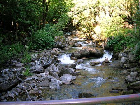 arbres: rivière