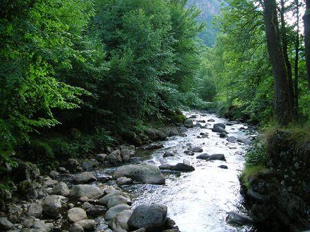 arbres: et au milieu, coule une rivière