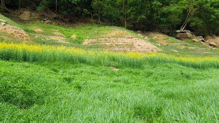 Greenery grass field.