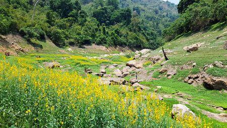 Greenery dam during spring.