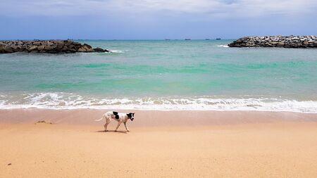A sea dog on the beach. Stok Fotoğraf
