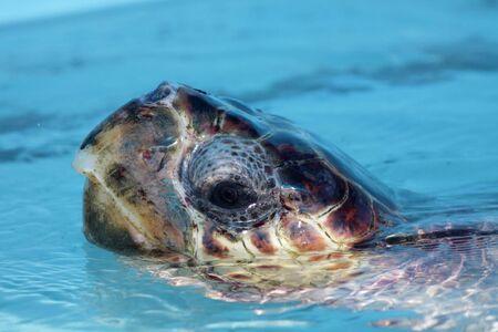 mujeres: Sea turtle, Isla Mujeres, Mexico
