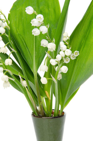 muguet: Vase of lilies, isolated on white