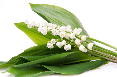 muguet: Bouquet of lilies, isolated on white