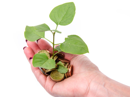 Growth concept with human hand holding a green small plant planted in coins, isolated on white photo