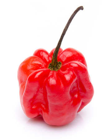 Red habanero pepper, isolated on white