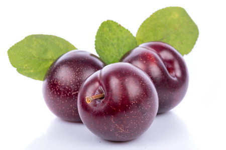 purple leaf plum: Ripe purple cherry plums, isolated on white