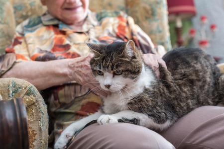 Elderly woman with a cat on her knees