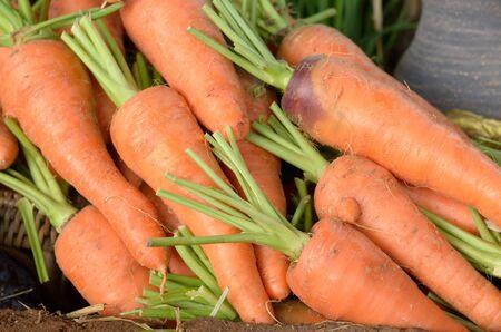 carot: Fresh carot