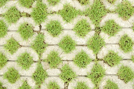 Grass in the holes of brick pattern Stock Photo