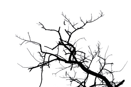Dead branches on white background photo