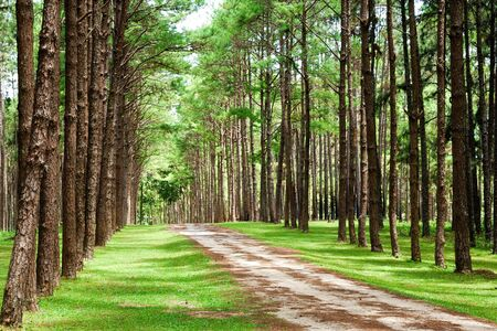 Country road green trees in the northern of Thailand Stock Photo