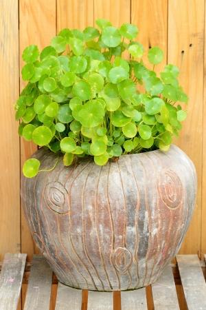 olla barro: Planta verde en la hermosa olla de barro para el jard�n Foto de archivo