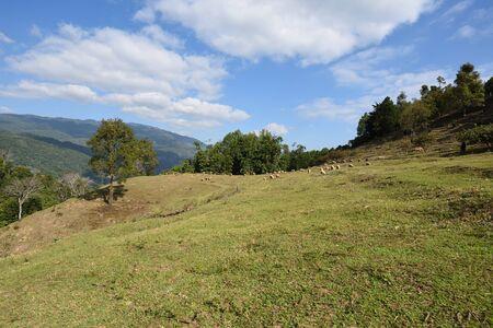 Mountain scenery in Doi Inthanon National Park