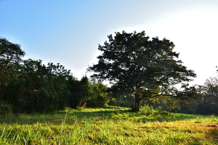Landscape of tropical forest in the summer or autumn