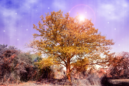 Golden tree in the forest of fantasy