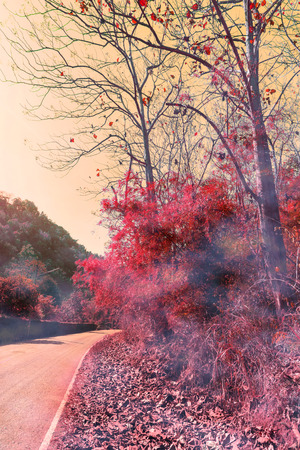 Scenery of red tree and road in imagery