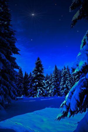 The winter forest, night scene. Snowy landscape.