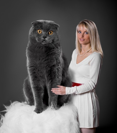 a studio portrait of a gigantic Scottish shorthair cat and a woman  photo