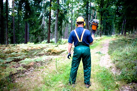 a woodcutter at work in the forest photo