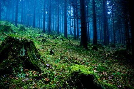 fog forest: foggy forest at the morning at autumn