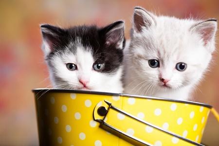 furry animals: Ritratto di un giovane piccolo gattino persiano Archivio Fotografico