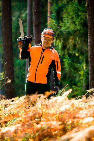 woodcutter: a woodcutter at work in the forest