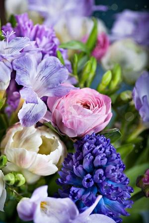hyacinths: bunch of freesias, tulips, ranunculus and hyacinths Stock Photo