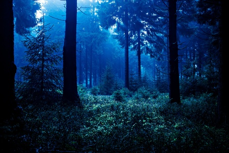 Night scene of autumn forest in Thuringia, Germany Stock Photo - 12614727