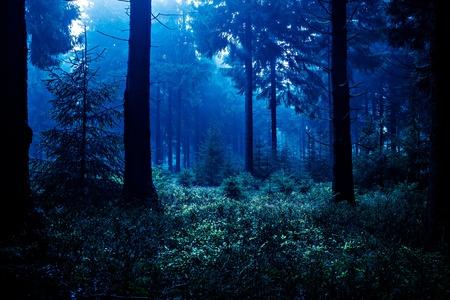 foresta: Scena di notte di autunno foresta in Turingia, Germania Archivio Fotografico
