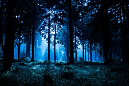 night landscape: Night scene of autumn forest in Thuringia, Germany