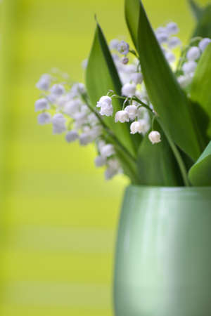 the bunch of lily of the valley in front of green photo