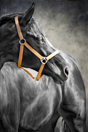 painting portrait of a horse photo