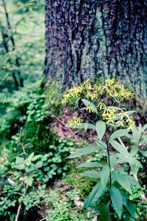 evergreen forest: Evergreen forest near Masserberg, Schiefergebirge, Thuringia, Germany Stock Photo