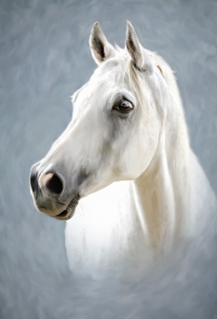 a photograph stylized as painting portrait of a white horse Stock Photo