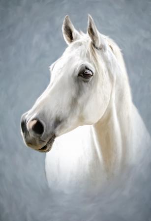 cabeza de caballo: una fotograf�a estilizada como pintura retrato de un caballo blanco Foto de archivo