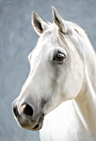 oil paintings: a photograph stylized as painting portrait of a white horse Stock Photo