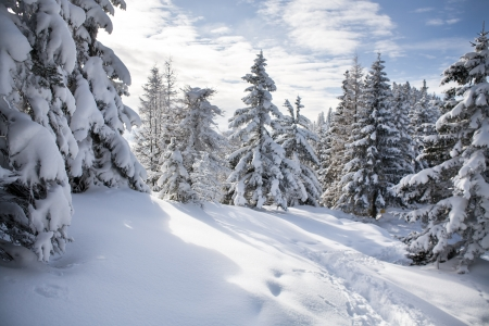 h�tte schnee: Winterwald in den Alpen in der N�he von Kufstein in �sterreich, Europa. Lizenzfreie Bilder