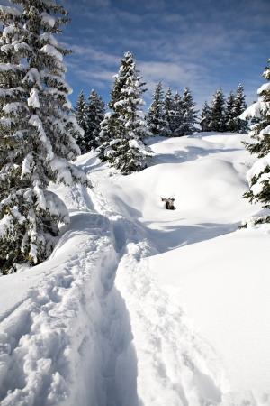 h�tte schnee: Winterwald in den Alpen in der N?he von Kufstein in ?sterreich, Europa.