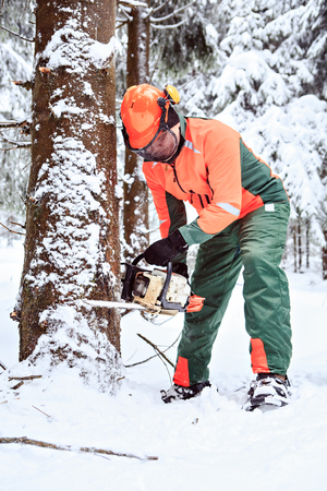 woodcutter: a woodcutter at work in the winter forest
