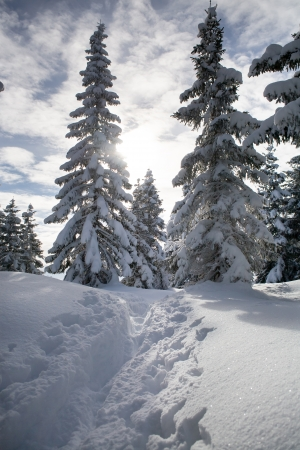 Winter forest in Alps near Kufstein in Austria, Europe.