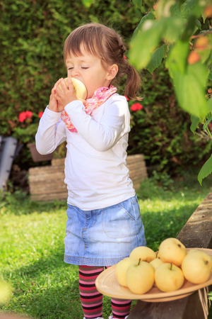 little girl collecting apples in the garden photo
