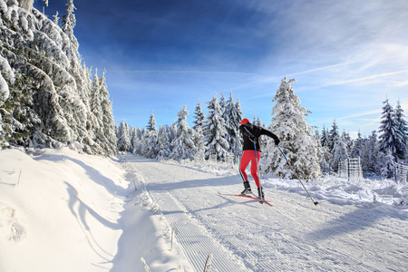 area: A man cross-country skiing on the forest trail